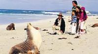 ทัวร์ออสเตรเลีย  เที่ยวออสเตรเลีย   เอดิเลด แกงการูไอส์แลนด์ 6 วัน