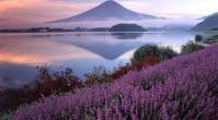 ทัวร์ญี่ปุ่น เที่ยวญี่ปุ่น  โตเกียว ภูเขาไฟฟูจิ  5  วัน