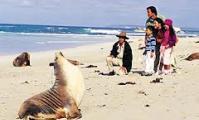 เที่ยวออสเตรเลียแบบง่ายๆ